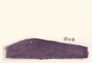 「恵みの色」近松素子